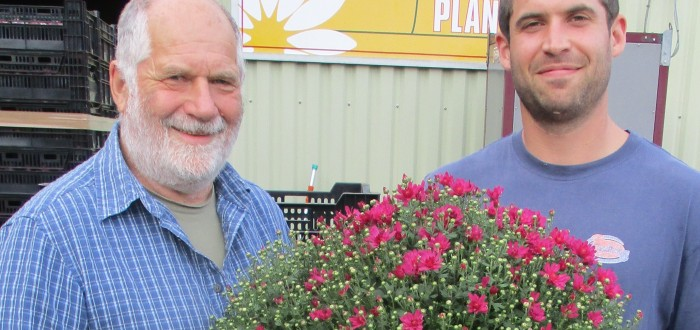 Peter and Adam Eastwood with one of this year's garden mum plants.