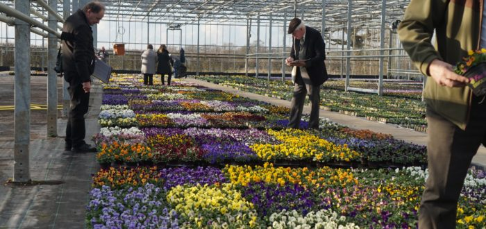 Press Day- trials on view at Grange Nurseries