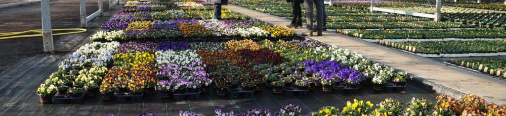 Growers review the 2018 Meadow Croft Viola and Pansy Festival