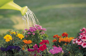 Watering during a hosepipe ban