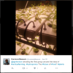 Connor's Tweet on Vertical Farming