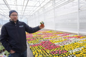 Rick talks about a new mini primula in 7cm from Schoneveld breeding.
