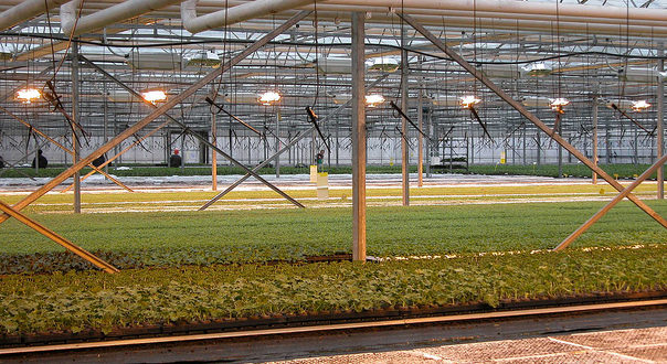 Young plant nurseries such as this will continue to be exempt from business rates.